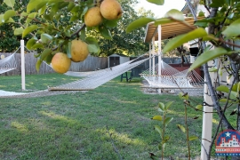 home-for-sale-round-rock-fruit-tree